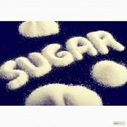 На постоянной основе,  на экспорт сахар свекловичный,  тростниковый.
