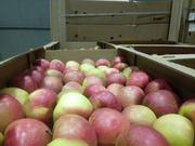 Яблоки Алеся 70+.